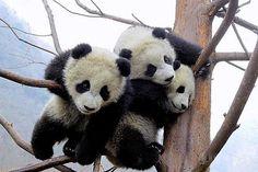 SHARING IS LiVING: binatang sy suka!!!