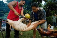 NUKUNUKU, TONGA - MAY 6: The villagers of Nuku Nuku work all day and through the night to prepare a feast for the Royal wedding of the Honorable Titilupe Fanetupouvava'u Tuita to the son of the noble of Nukunuku village, Siaosi Kiu Tau ki Vailahi Kaho on May 6, 2007 in Nuku Nuku, Tonga. Tonga is one of the last surviving monarchies in the Pacific islands, however there has been a recent push towards democratic reform, challenging the people of Tonga to maintain their cultural heritage while…
