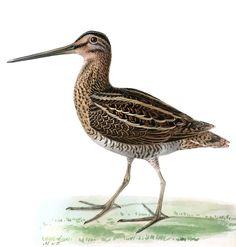 Beautiful Birds, Natural Beauty, Tuesday, Nature, Children, Board, Inspiration, Young Children, Biblical Inspiration