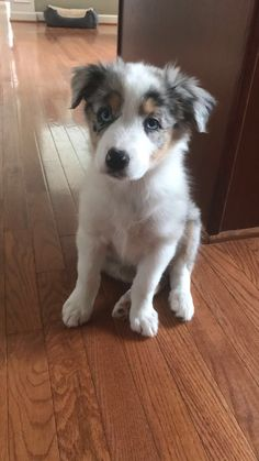 Dogs And Puppies Breeds Aussies Animals Ideas Super Cute Puppies, Cute Little Puppies, Cute Dogs And Puppies, Cute Little Animals, Baby Dogs, Doggies, Baby Animals Pictures, Cute Animal Pictures, Puppy Pictures