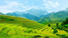 Rice field, Mu Cang Chai, Vietnam
