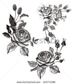 monotone roses