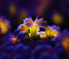 Photograph Bioluminescenza by Antonio Amati on 500px