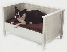 Napquest: elevated dog bed - sides are a wee over the top.