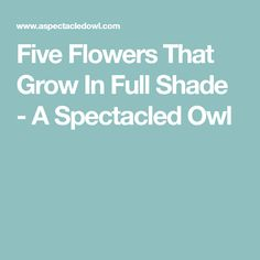 Five Flowers That Grow In Full Shade - A Spectacled Owl