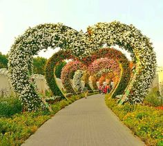 The Hearts Passage is designed in such a way that its each and every side which grows flowers always faces the visitors. Growing Flowers, Large Flowers, Real Flowers, Geranium Plant, Geranium Flower, Heart Structure, Million Flowers, Miracle Garden, Facing The Sun