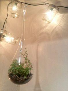 Hanging Teardrop Terrarium with Baby Tears