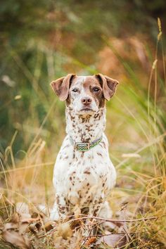 5 Pro Tips for Senior Pet Photography - includes professional tips and instructions on how to get the best photos of older pets, blind or deaf dogs, and the best locations, light and layouts to use. | Pretty Fluffy | www.prettyfluffy.com