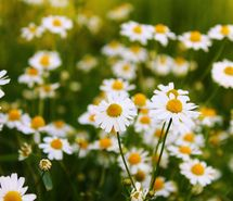 Inspiring image fields, flowers, garden, green, nature, photography, summer, white, yellow #516080 - Resolution 640x427px - Find the image to your taste