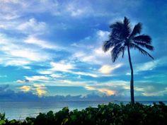 Palm tree paints a blue sky. Fort Lauderdale beach morning sunrise image courtesy @FtLauderdaleSun
