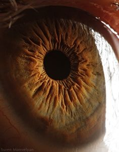 SUPER high resolution photos of human eyes.  (Animal eye ones from here are amazing too!)
