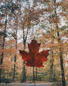 Fall leaves are amazing! #seasons #fall #outono #autumn #fallseason #leaves #coloursofautumn  @nicholeciotti