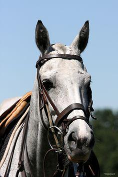 Cute polo pony!