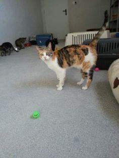 PIPPI - Caso Especial - Gato adoptado - AsoKa el Grande
