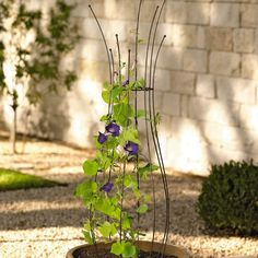 Jardin Pot Trellis - Could DIY