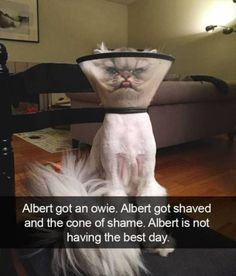 Funny Animal Picture Dump Of The Day 24 Pics #dogsfunnyhilarious