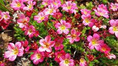 Gör trädgården vackrare och motverka ogräs med hjälp av marktäckare. Här är 13 favoriter att välja på! Garden Inspiration, Helpful Hints, Plants, Cement, Espadrilles, Gardens, Deko, Gypsum, Espadrilles Outfit