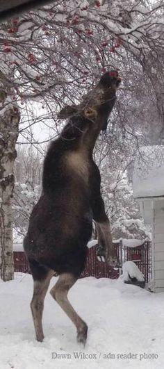 Moose, Alaska                                                                                                                                                      More                                                                                                                                                     More