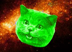 OMG, cats in space!
