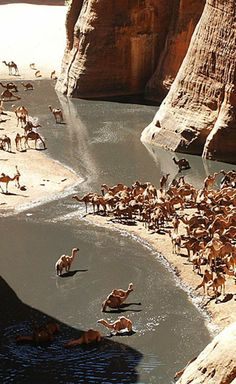 Archei Oasis - Knee-deep wading is bliss for camels in north-eastern Chad's Archeï. Probably the most famous guelta in the Sahara. A guelta is a pocket of water that forms in drainage canals or wadis in the Sahara. The Places Youll Go, Places To See, Beautiful World, Beautiful Places, Paises Da Africa, Water Sources, Sharjah, Abu Dhabi, Wonders Of The World