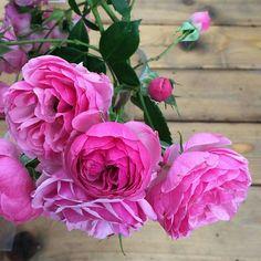Ботанический сад | Аптекарский огород | ВКонтакте   Выставку роз в #Аптекарскийогород решили продлить до 14 июля!  Так что у вас еще есть шанс увидеть и понюхать самые разнообразные виды и сорта роз