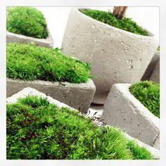 Adventive Like Moss, and you ?