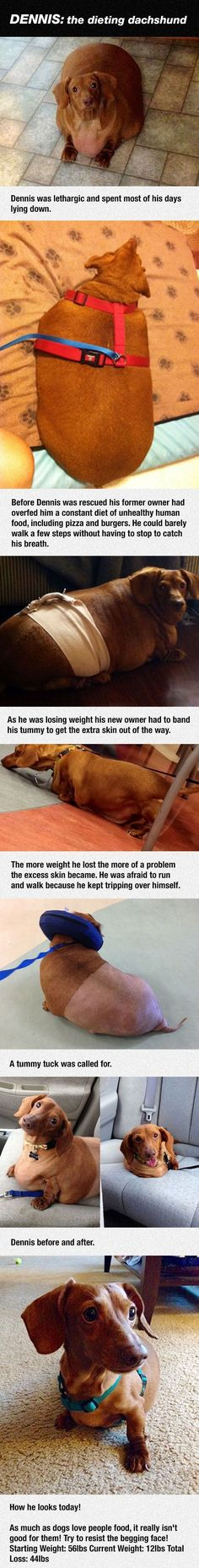 Meet Dennis The Dieting Dachshund cute animals dogs adorable dog story puppy animal pets stories dachshund