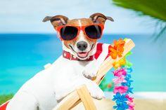 jack russelel honden afbeeldingen | Gaat je hond mee op reis? Een goede voorbereiding is alles …