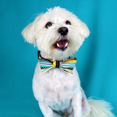 Blue And Yellow Patterned Dog Bowtie Collar Handmade Collar Bow Pattern, Yellow Pattern, Bow Tie Wedding, Dog Wedding, Bow Tie Collar, Bow Ties, Dog Christmas Gifts, Dog Bows, Dog Gifts