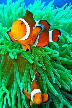Tropical Coral Reef Underwater Ocean Fishes Boy Adjustable Denim Baseball Caps Hip Hop Cap