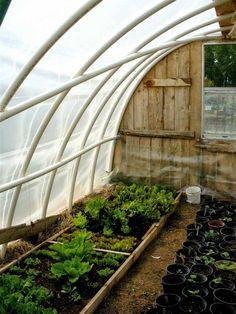 intérieur serre jardin diy idée plante