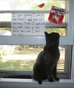 Cat Shaming (didn't think it was possible as my cats never seem ashamed of anything they do! Funny Animal Memes, Cute Funny Animals, Cat Memes, Cute Cats, Silly Cats, Cats And Kittens, Funny Cats, I Love Cats, Crazy Cats