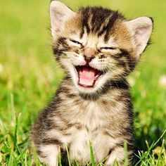 Image Gallery happy kitty face