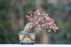 ~ Mini Sweet Bonsai Tree ~