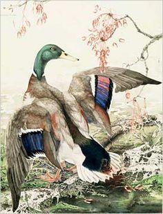 Watercolor Portrait Painting, Mallard, Sally, Bird, Artist, Animals, Beautiful, Animales, Animaux