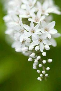 White Flowers in Bloom Amazing Flowers, My Flower, Beautiful Flowers, Exotic Flowers, Jasmin Flower, Bird And Flower Tattoo, Tiny White Flowers, Anemone Flower, Happy Flowers