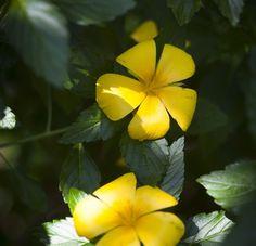 Las flores son parte del lenguaje de la naturaleza. Las de color amarillo dicen que llegó fiesta y que es hora de celebrar la vida. Mira estas 10.