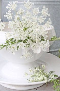 Tinkerbell - white flowers