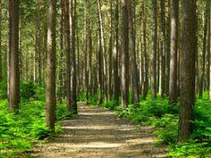 ガンの予防にもなる、森林浴の効果と東京近郊の森