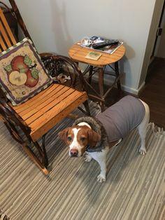 Flauta's new coat