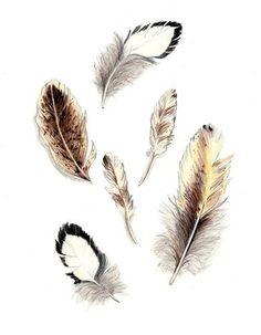 """Feather Group Original Art Drawing"" - Original Fine Art for Sale - © Kathleen Ney"