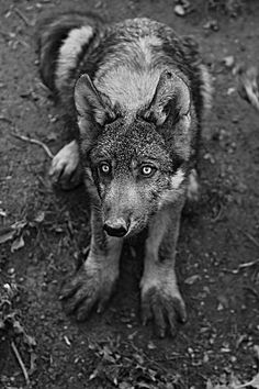 why did I have a wolfdoll? it was not a wolf nor a doll, really; it protected me from the wolves......wolfdoll.