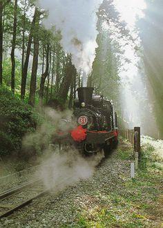 Take Alishan forest train from Chiayi to Alishan