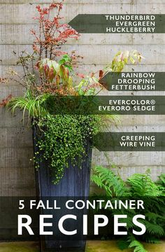 "We call this the 'Just a Kiss of Fall' container because it's about ""autumn,"" but in an elegant, subtle way. These plants are for more temperate zones, but steal the idea. In colder zones, use a Japanese maple and Charming Fantasy™ Snowberry instead."