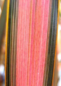 Phormium Centerpiece™ Pink Flamingo