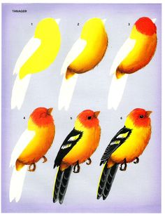 Birds in my garden - Oksana Volkova - Picasa Web Albums