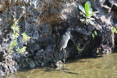 So much beauty at the Kalahuipua'a Fishponds, Mauna Lani Resort