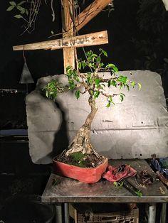 an irreverant blog by a questing bonsai artist Planting Plants, Bonsai Styles, Ficus, Rock Style, Art Blog, Plant Hanger, Planter Pots, Gardening, Artist