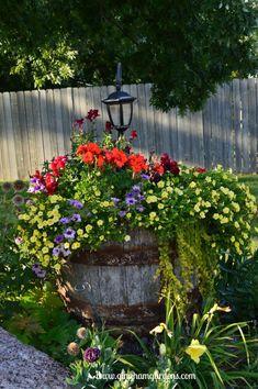 Whiskey Barrel Planter - Flower Gardens in September Container Flowers, Flower Planters, Container Plants, Garden Planters, Container Gardening, Fall Planters, Gardening Zones, Landscaping With Rocks, Backyard Landscaping
