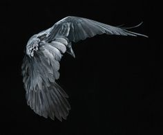 Perfect! By Tim Flach
